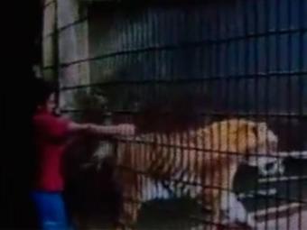 O tigre Hu, de 8 meses, foi colocado em uma área de isolamento após o ataque - Foto: Reprodução | YouTube