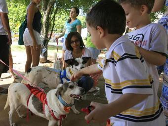 Crianças se empolgam com os animais para adoção - Foto: Joá Souza | Arquivo | Ag. A TARDE