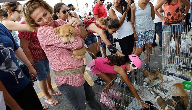 A feira é uma oportunidade para quem deseja adotar um animal de estimação - Foto: Marco Aurélio Martins | Ag. A TARDE