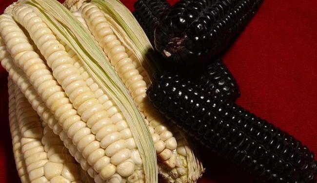 O milho é comum em países como Peru e Chile - Foto: Rejane Carneiro | Ag. A TARDE 11.03.2009