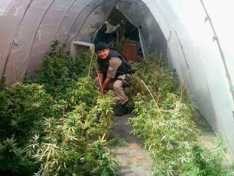 Policiais apreenderam 100 pés de maconha e outros tipos de drogas - Foto: Divulgação | PM