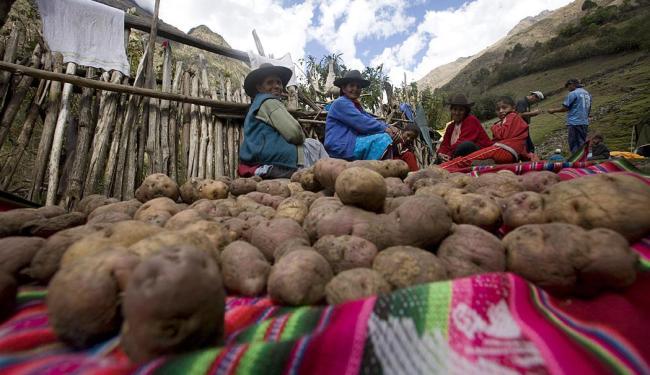 O Peru produz até dois mil tipos diferentes de batatas - Foto: Promperu | Divulgação