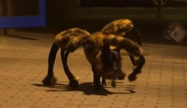 Cadela-aranha assusta que se depara com ela - Foto: Reprodução