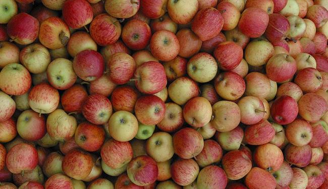 Uma maçã e meia é suficiente para a redução, dizem pesquisadores - Foto: Luciano da Mata   Ag. A TARDE