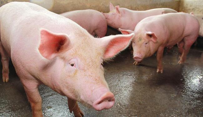 Brasil produz 3,4 milhões de toneladas de carne inspecionadas por ano - Foto: Joá Souza   Ag. A TARDE   15.06.2012