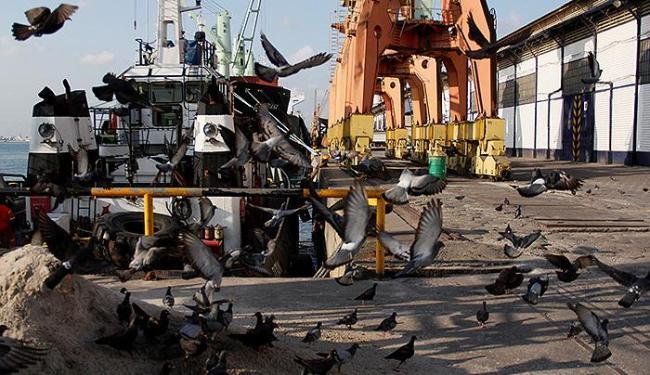 Perdas de trigo atraem os pombos no Porto de Salvador - Foto: Joá Souza | Ag. A TARDE