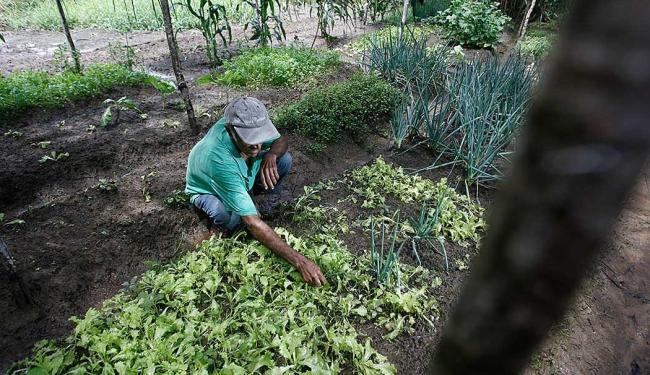 O evento sobre segurança e saúde no trabalho é destinado a trabalhadores rurais baianos - Foto: Raul Spinassé | Ag. A TARDE