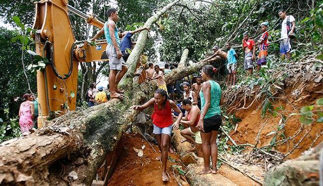 Queda de árvore sobre máquina matou trabalhador - Foto: Joá Souza   Ag. A TARDE