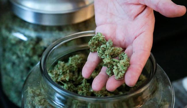 Referendo decidiu pela legalização da maconha - Foto: Agência Reuters