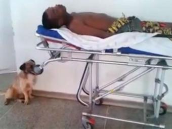 Até no hospital, o cachorro ficou do lado do dono - Foto: Reprodução