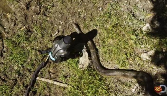 Apresentador desistiu de ser comido pela cobra - Foto: Reprodução