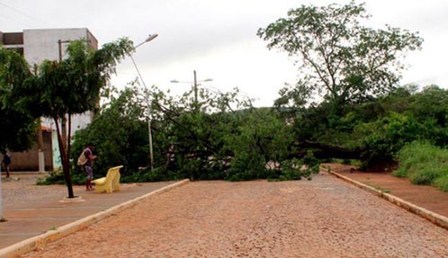 Árvores caíram no meio da pista, atrapalhando o tráfego na região - Foto: Reprodução | Site Brumado Agora