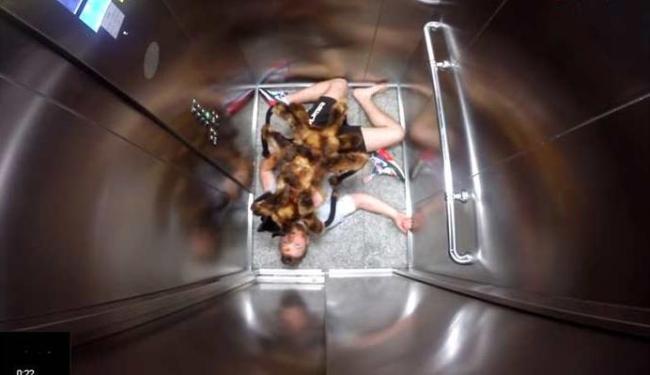 Cachorro é fantasiado como aranha e assusta as pessoas - Foto: Reprodução