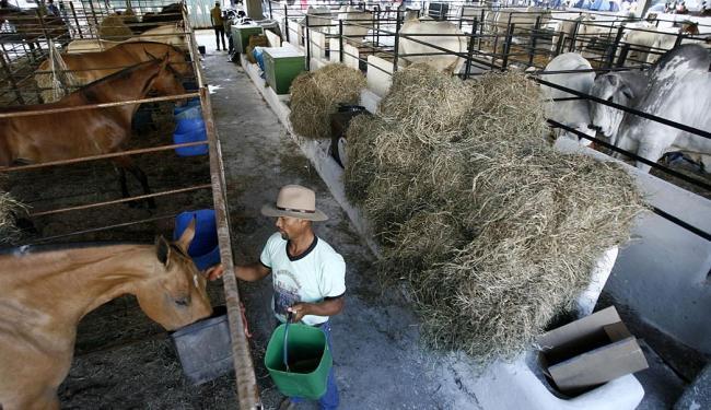 Ao lado dos bovinos, os cavalos estão entre os principais apelos deste evento anual - Foto: Raul Spinassé | Ag. A TARDE | 30.11.2014