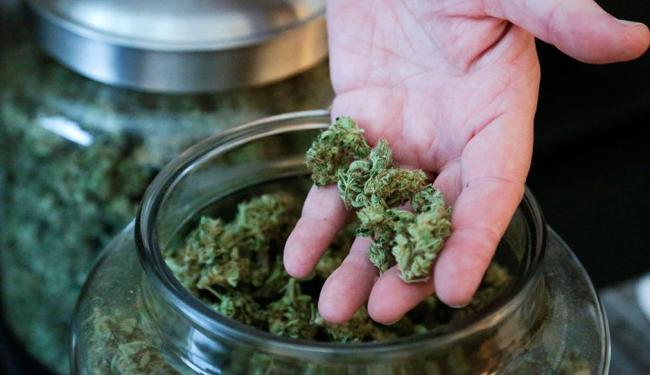 A liberação da cannabis é pleiteada para usos terapêuticos e científicos - Foto: Agência Reuters