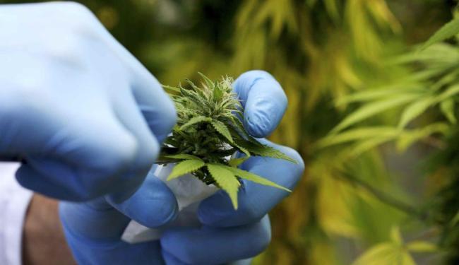 O CFM vai detalhar quais são os profissionais que vão poder fazer a prescrição - Foto: Agência Reuters