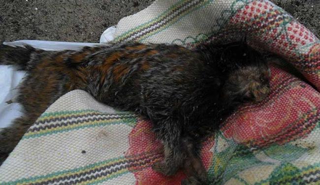 Animais foram encontrados no centro da cidade - Foto: Raysa Martins | Foto do Internauta