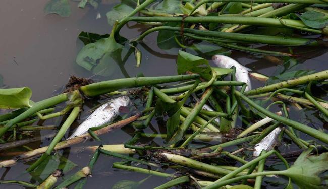 Órgão ambiental (Inema) informou não ter feito registro - Foto: Margarida Neide | Ag. A TARDE