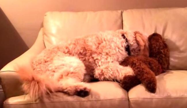Laika abraçou o companheiro para acalmá-lo - Foto: Reprodução | Youtube