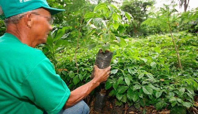 Função de jardineiro está entre as vagas disponíveis para esta quarta-feira, 3 - Foto: Joá Souza | Ag. A TARDE