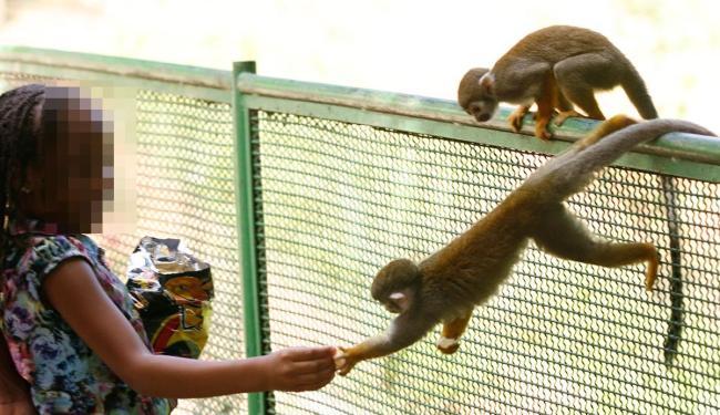 Flagrante de alimentação indevida de macacos no zoo da capital em julho passado - Foto: Marco Aurélio Martins | 2.7.2014 | Ag. A TARDE