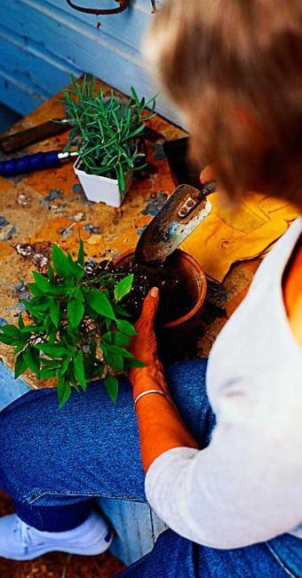 Função de auxiliar de jardinagem oferece duas vagas - Foto: Divulgação