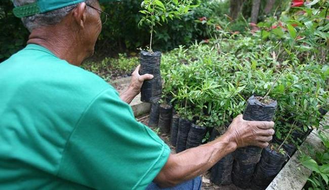 Há 32 vagas disponíveis para auxiliar de jardinagem - Foto: Joá Souza | Ag. A TARDE | 31/10/2011