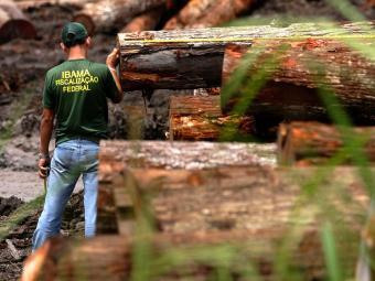Monitoramento aponta que foram desmatados 288 km² na Amazônia Legal em janeiro - Foto: Beto Barata | Arquivo | Agência Estado