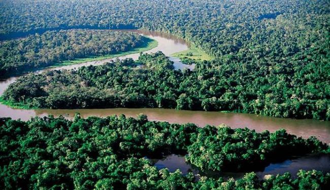 Desmatamento na floresta amazônica tem crescido - Foto: Divulgação