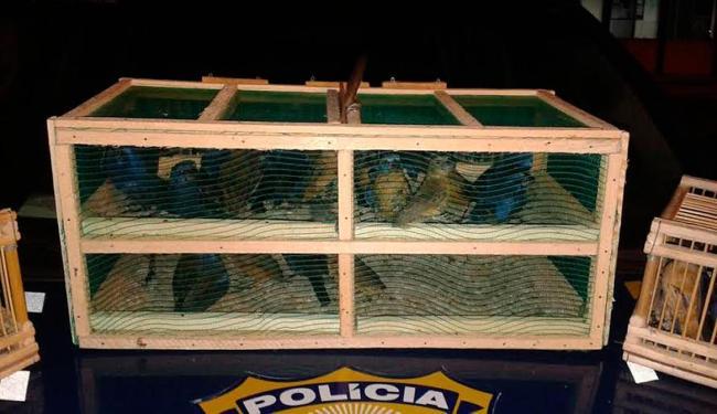 Pássaros foram encaminhados para a Delegacia de Polícia Judiciária local - Foto:   Ag. A TARDE
