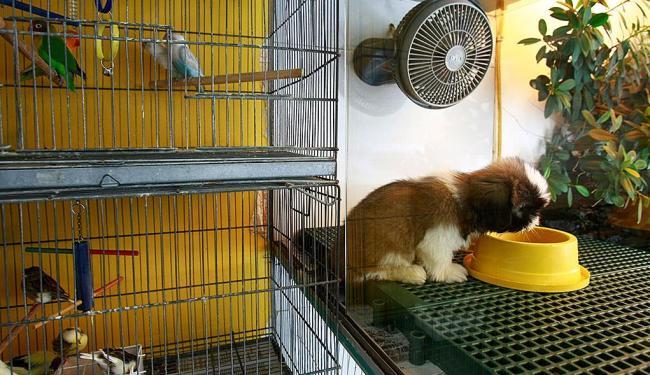 Legislação diz que animais devem estar em ambiente livre de excesso de barulho - Foto: Fernando Vivas   Ag. A TARDE