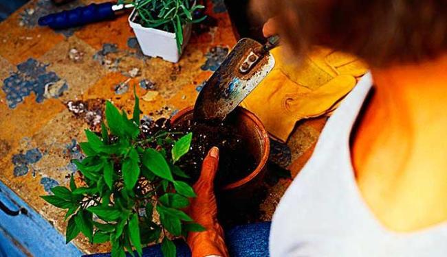Função de jardineiro oferece 4 vagas nesta quarta - Foto: Divulgação