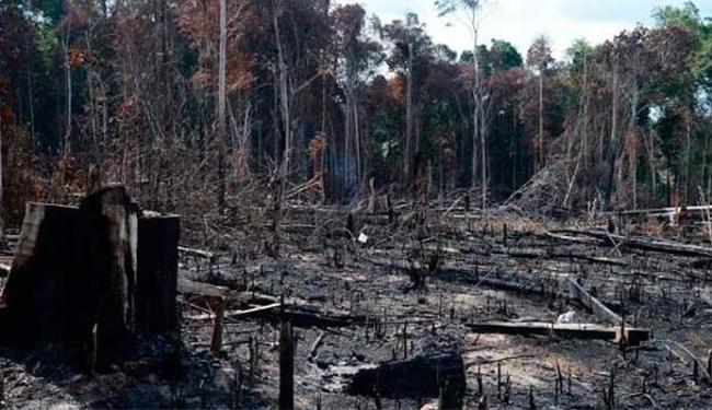Desmatamento ainda é alto na Amazônia Legal - Foto: Agência Brasil