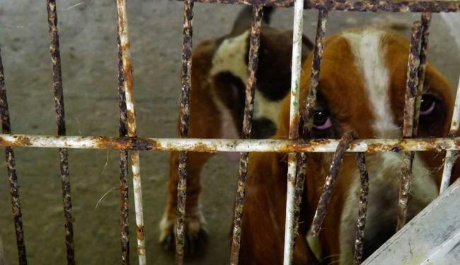 Animais eram criados para reprodução e comercialização de filhotes - Foto: Divulgação | Ana Tavares