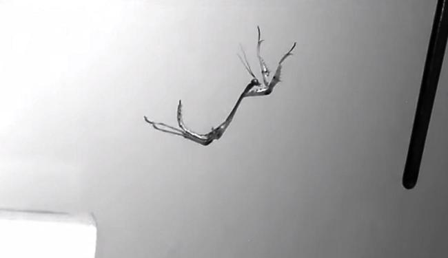 Quadro congelado mostra a metade do salto do louva-a-deus - Foto: Reprodução