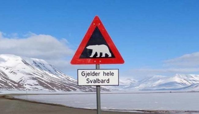 Ursos polares estão à solta no Ártico - Foto: Agência Reuters