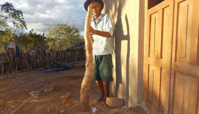 Boa para consumo, 'mandioca gigante' virou atração em Bom Jesus da Serra - Foto: Reprodução | Portal Bom Jesus Eventos