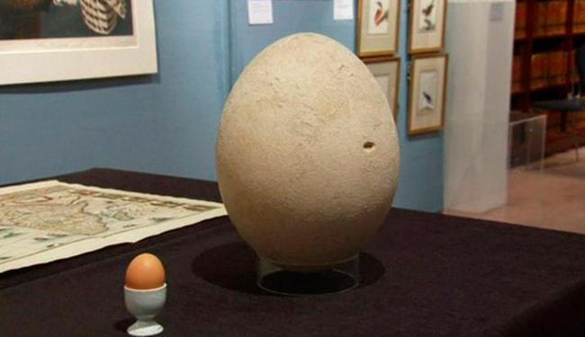 Na foto, diferença de tamanho entre ovo de galinha e ovo a ser leiloado fica evidente - Foto: Reprodução | BBC