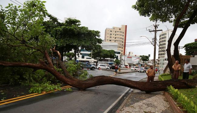 Árvore caiu na Paulo VI interditando pista nos dois sentidos - Foto: Joá Souza | Ag. A TARDE