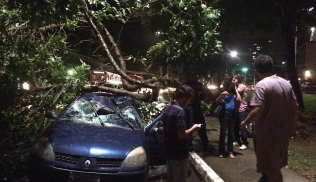 Árvore cai em cima de carro em movimento - Foto: Gustavo Mercês | Cidadão Repórter