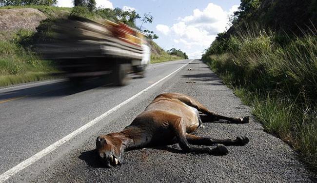Condutor deve atentar para animais na pista para evitar acidentes - Foto: Luiz Tito l Ag. A TARDE