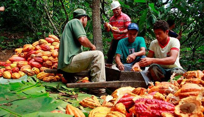 Intenção é também promover atrativos relacionados à cadeia produtiva, como passeios por fazendas - Foto: Alisson Fagundes l Divulgação