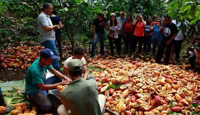 Propriedades preparam-se para receber visitantes e incrementar negócios da região - Foto: Alisson Fagundes l Divulgação