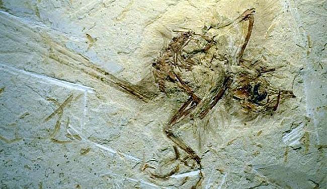 O fóssil foi descoberto em 2011 - Foto: Ismar Carvalho | Nature Communications | Divulgação