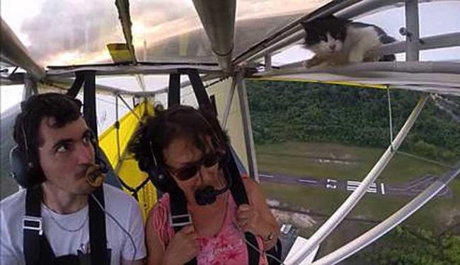 Instrutor só notou animal 40 segundo após decolagem - Foto: Reprodução