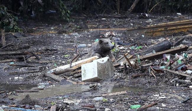 Animais escaparam após inundação na Geórgia - Foto: Tinatin Kiguradze   AP Photo