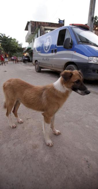 O cãozinho acompanhou, com o olhar, a remoção do corpo - Foto: Adilton Vegeneroles | Ag. A TARDE | 30.07.2015
