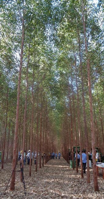 O Programa Mais Árvores na Bahia foi lançado em um Dia de Campo - Foto: Divulgação l ABAF