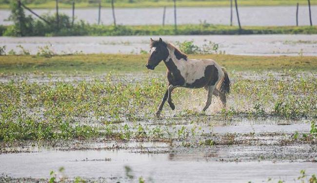 Cavalo passeia pela fazenda em Marajó - Foto: Leogump | Ag. A TARDE