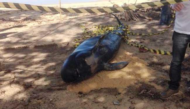 Veterinária fará necropsia no animal para saber motivo da morte - Foto: Site Radar 64